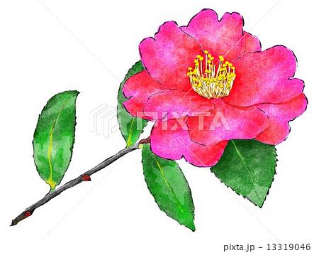 山茶花 植物 さざんか 1月の花のイラスト素材 Pixta