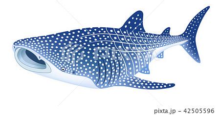 ジンベイザメのイラスト素材集 Pixtaピクスタ