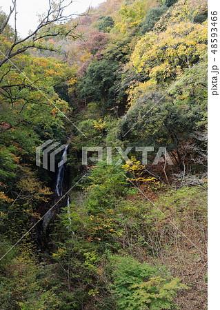 公園 村 川 相模 の 自然