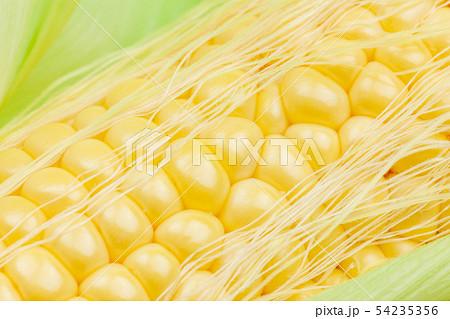 唐黍の写真素材 - PIXTA