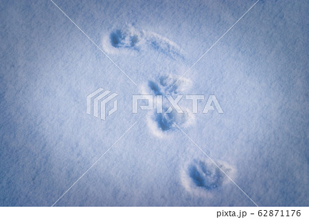 イタチ 足跡
